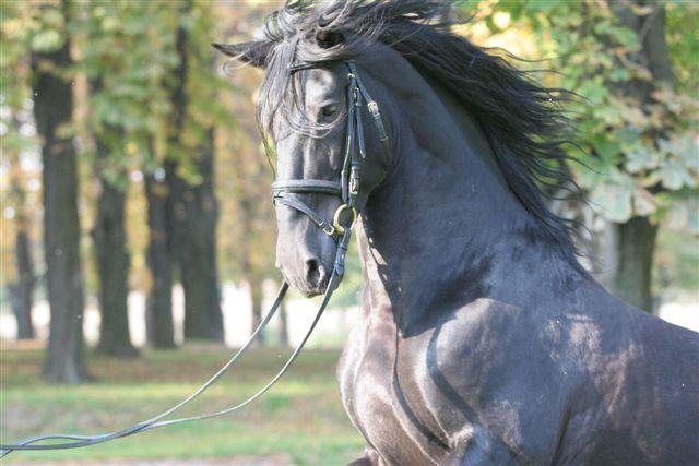 horse dexamethasone Offering assisted living, respite care and memory care in Atlanta, Georgia